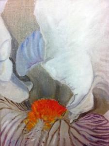 coeur d'iris blanc