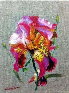 iris rose, rouge et jaune sur toile
